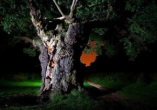 melewati pohon angker
